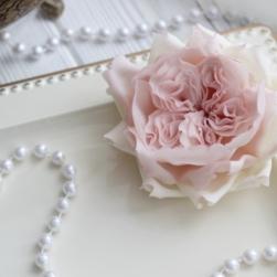 Роза Остина (розовая)